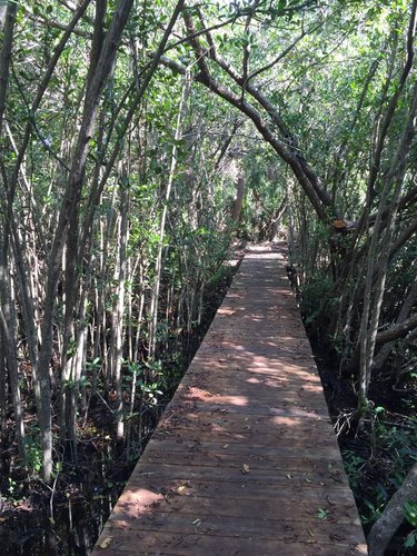 Alligator Creek Preserve