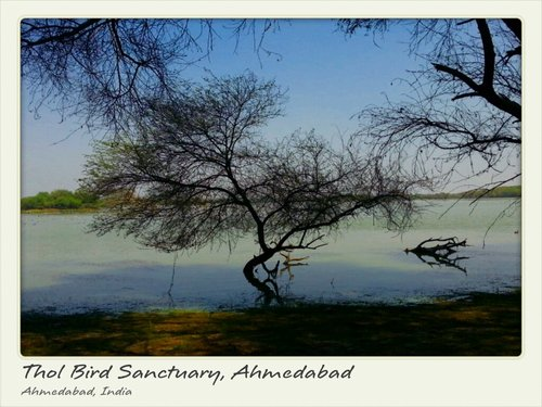 Thol Bird Sanctuary