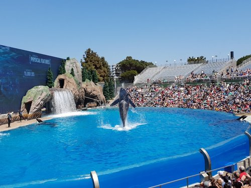 Sea World di San Diego