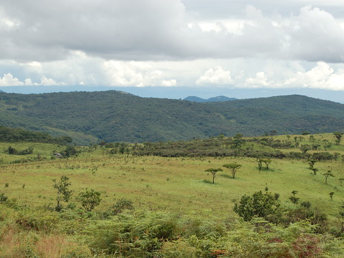 Nyika National Park (Malawi)