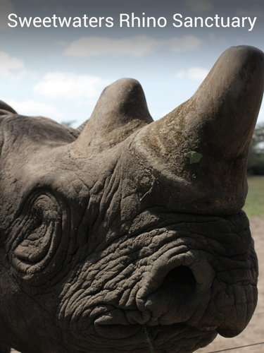 Sweetwaters Rhino Sanctuary